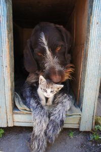 dog-and-cat-211503_960_720